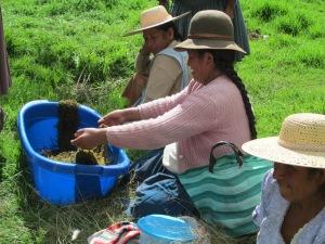 Huancarani Dye Day