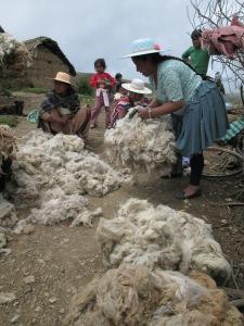 Buying Alpaca Fleece last January