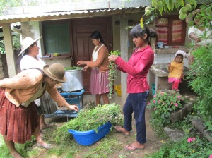 Prepping the Year´s 1st Suyku Leaf Dye Pot