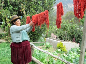 Doña Juana admiring her cochineal dyed skeins