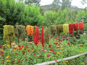 Doña Máxima Commented on How She Would Color Coordinate the Zinnias if She Could Weave with Them