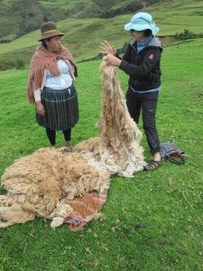 Doña Máxima and Susan Examining the Alpaca Fiber