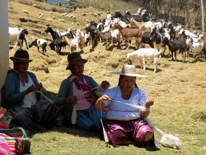 Doñas Maxima, Narciza, Toribia, Goats and Sheep