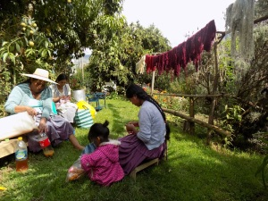 Dye Day, Adviana Crocheting, Zoraida Knitting, and Doña Máxima Dealing with the Chicha Vinegar